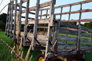 photos from the farm -mini pip